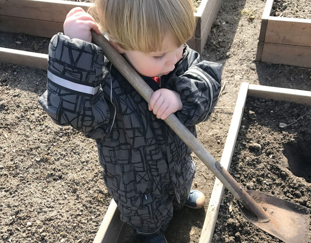barn lægger jordskokker i højbed
