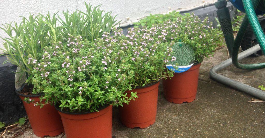 Havemama3 idéer til haven i weekenden - Havemama