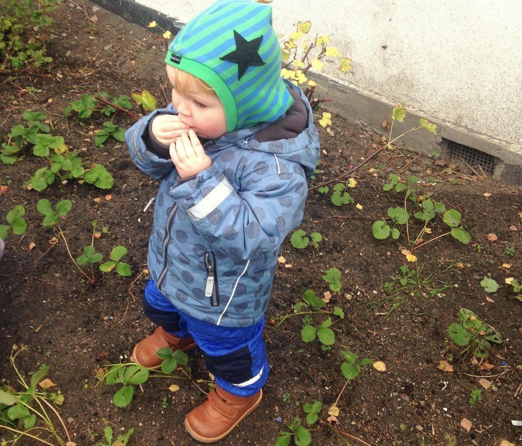 dreng i jordbærbed