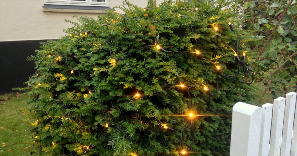 lysnet på busk