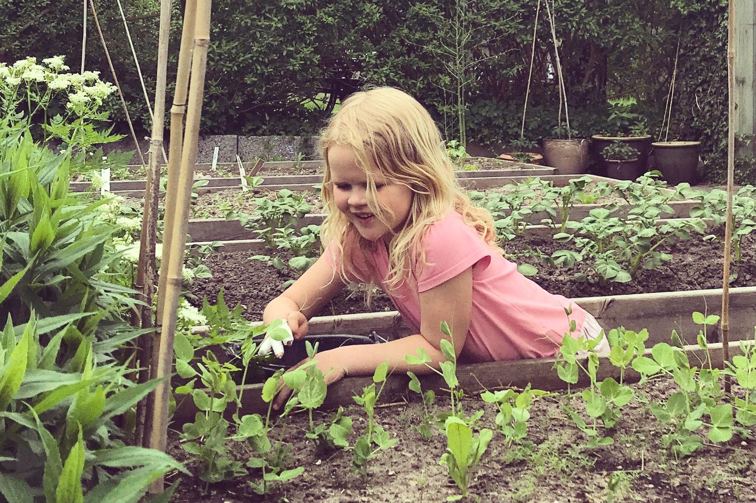 højbed køkkenhave grøntsager