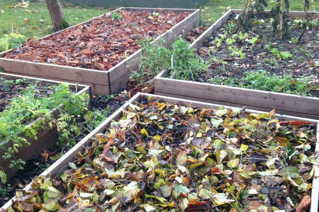 højbede køkkenhave efterår