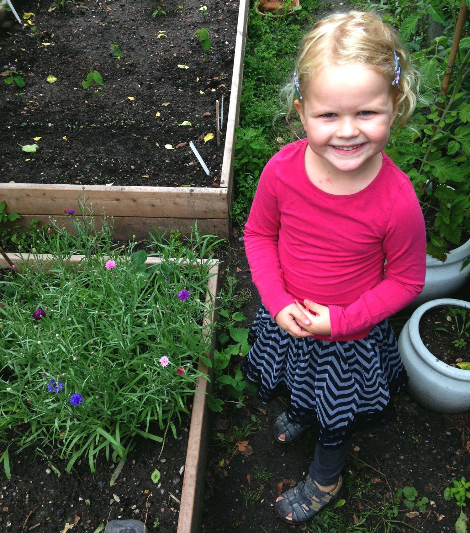 kornblomster i højbed med barn