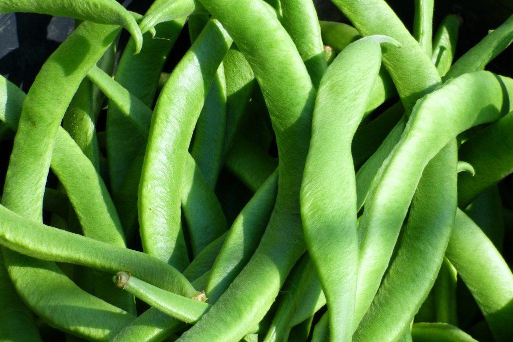runner-beans-1073214_1920